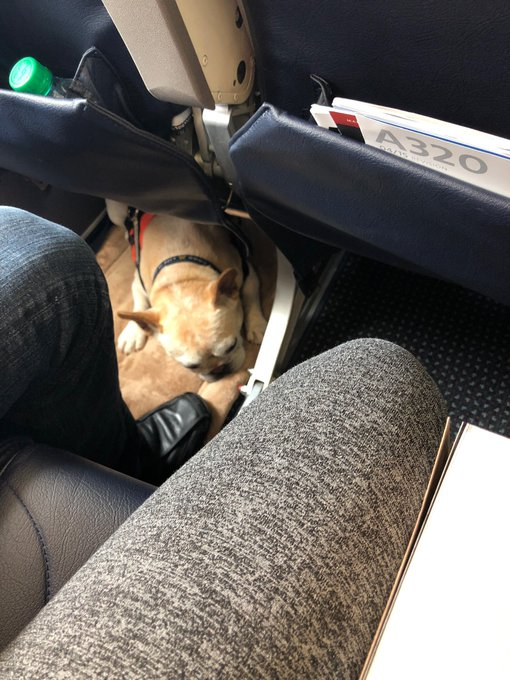 Bestest of bois as my flight buddy https://t.co/u2L09acRhs