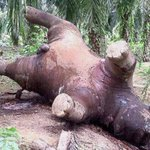 Killing of wildlife goes on in Sabah - Nation