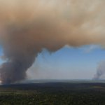 Deforestation releases more carbon than U.S. cars and trucks, study says