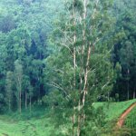 Forest stakeholders urged to preserve natural resources, enhance forest production