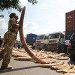 Laos a thriving market for Kenyan trophies