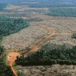 Tropical forests have become a net carbon source: Study