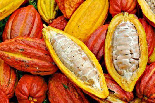 Ivory Coast produces record cocoa crop