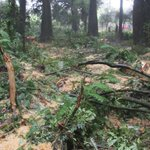 Men sentenced for taking wood from Department of Conservation reserves