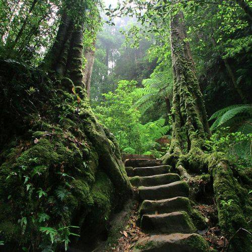 test Twitter Media - Every adventure requires a first step!  #enchantedforest #steps #EllenRothAuthor https://t.co/MKGkWwZbIF