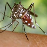 Rome outbreak of mosquito-borne illness prompts travel advice