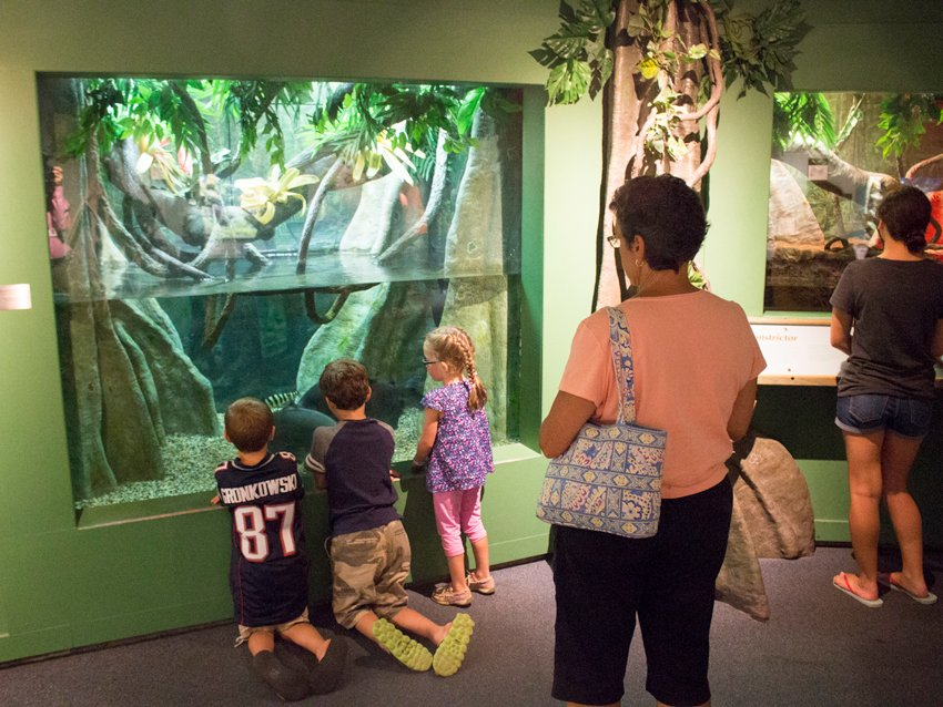 You can visit 40+ Massachusetts museums for free on Saturday