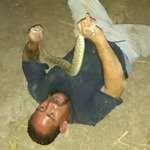 Rattlesnake bites man in the face after he tries catching it
