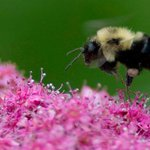 No doubt that neonicotinoids are killing birds, bees, scientists say