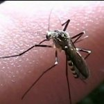 Illinois reports first human death of West Nile virus for the year