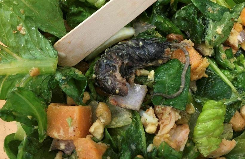 Man finds dead rodent in salad at Reykjavik restaurant