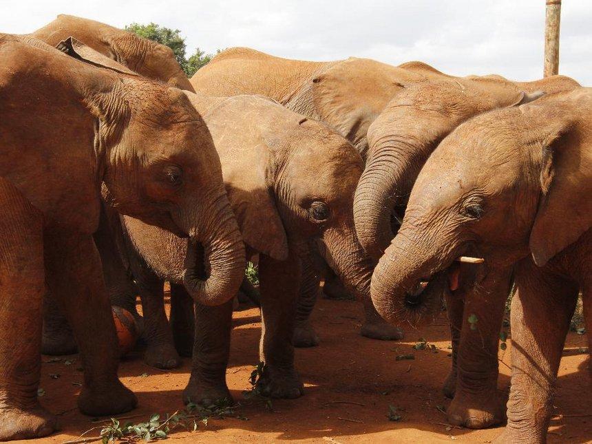 Nine elephants accidentally electrocuted in Botswana