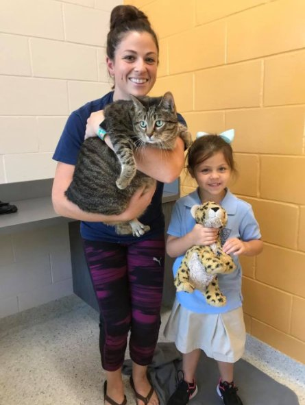 UPDATE: SC family adopts 24 lb. tubby tabby at Florida humane so - | WBTV Charlotte