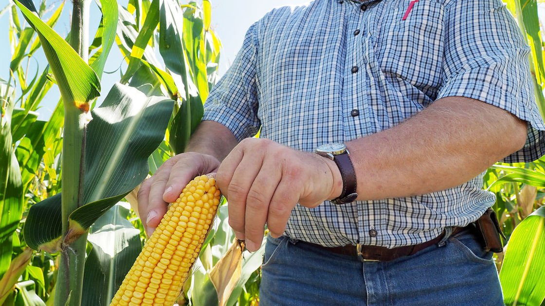 Harvest to ramp up after 'roller coaster' growing season
