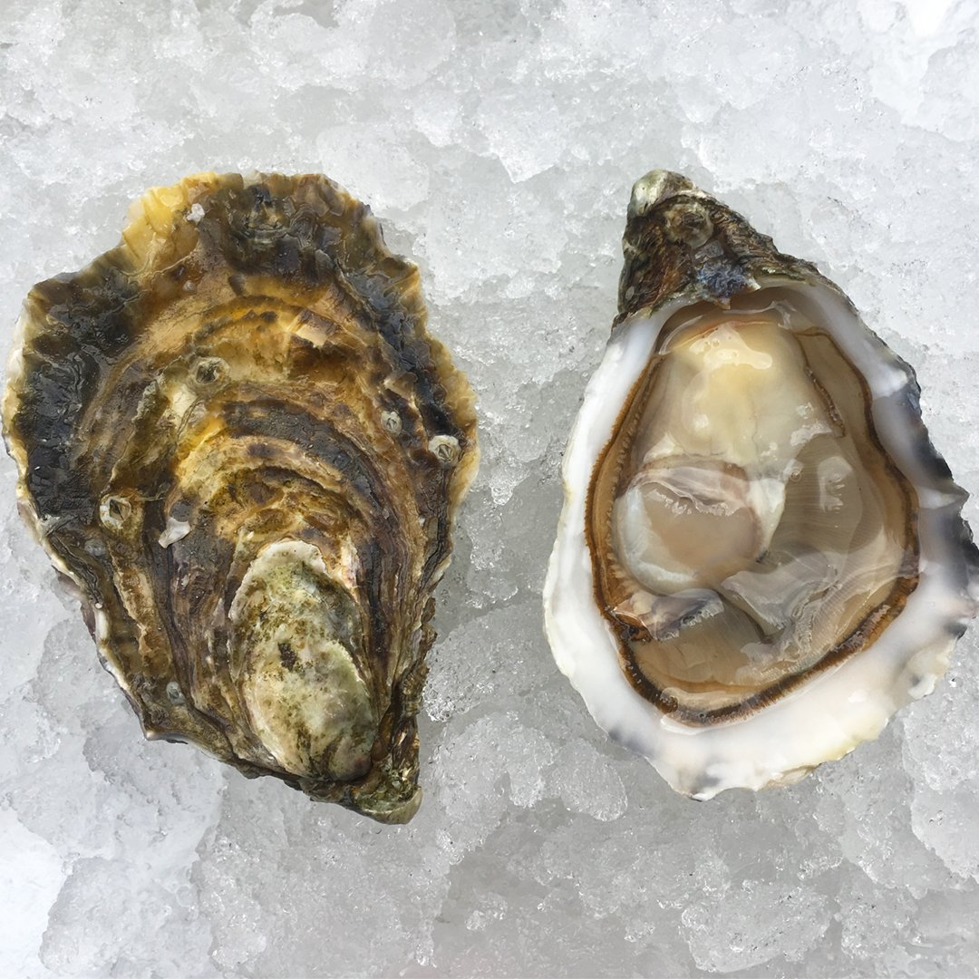 Wright Brothers Oyster & Porter House London's Best Dishes Made With Beer
