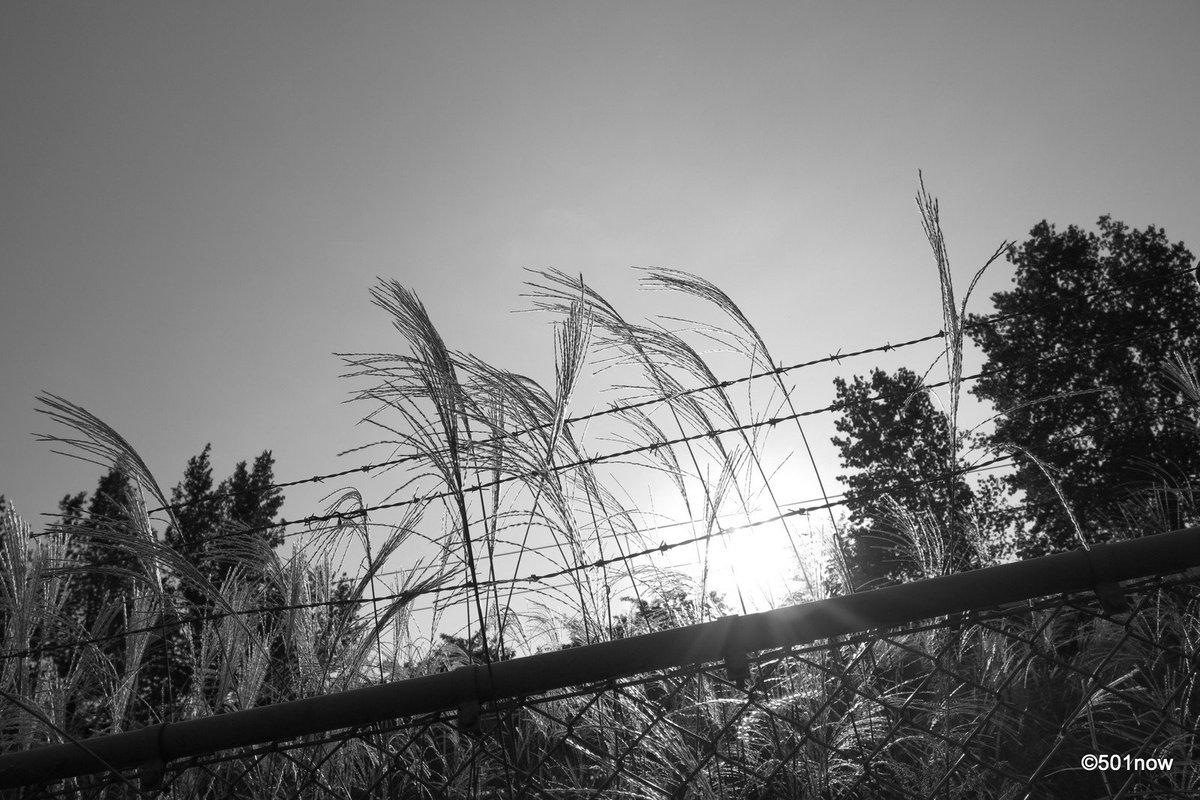 『秋の夕暮れ』#写真撮ってる人と繋がりたい#写真好きな人と繋がりたい#ファインダー越しの私の世界#写真 #カメラ #モノ