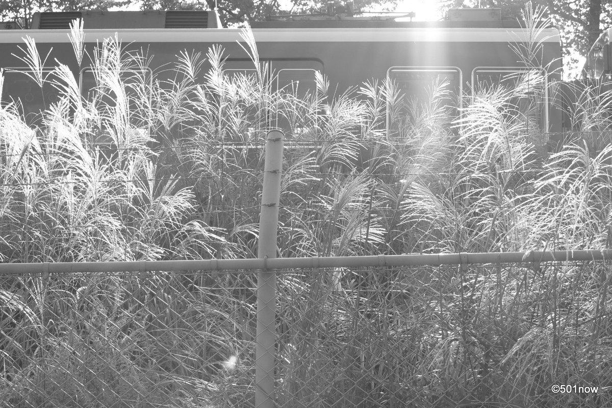 『ススキと阪急電車』#写真撮ってる人と繋がりたい#写真好きな人と繋がりたい#ファインダー越しの私の世界#写真 #カメラ