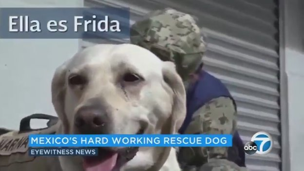 Rescue dogs working hard to save lives after #MexicoQuake
