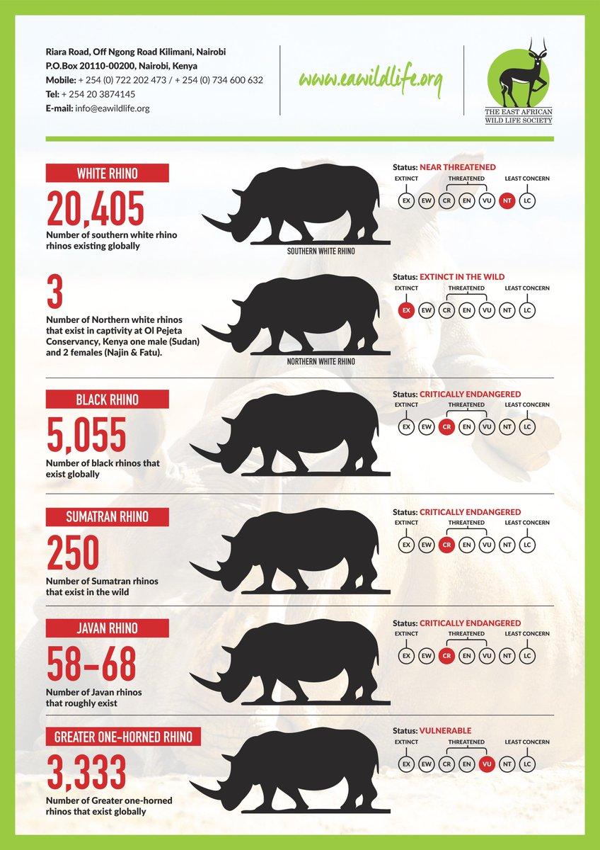 #WorldRhinoDay