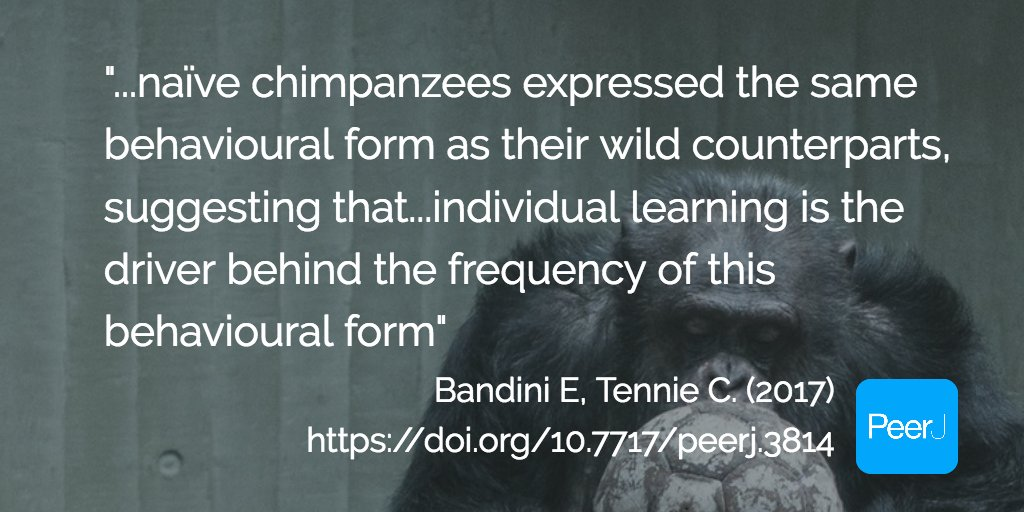 "test Twitter Media - Spontaneous reoccurrence of ""scooping"", a wild tool-use behaviour, in naïve chimpanzees https://t.co/2NFQwc8oTn https://t.co/GMiNr2cLAf"