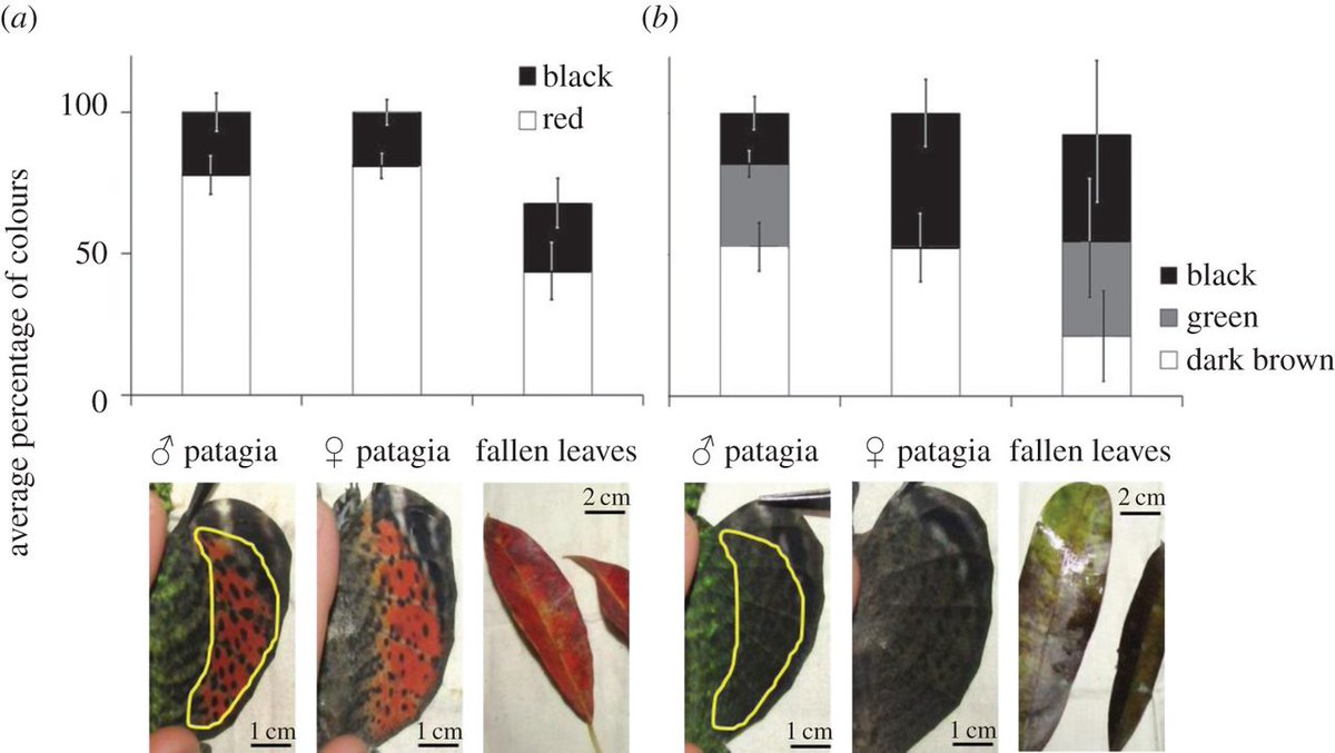 test Twitter Media - Gliding lizards mimic the colour of falling leaves, to avoid predation read in #biologyletters https://t.co/HKRjqs2Skh on #AutumnEquinox https://t.co/G7PTkPxBvh