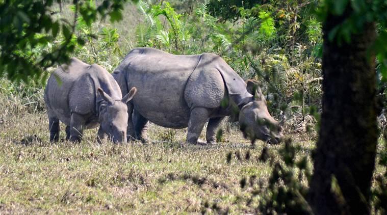 Kaziranga National Park to open for tourist from October2