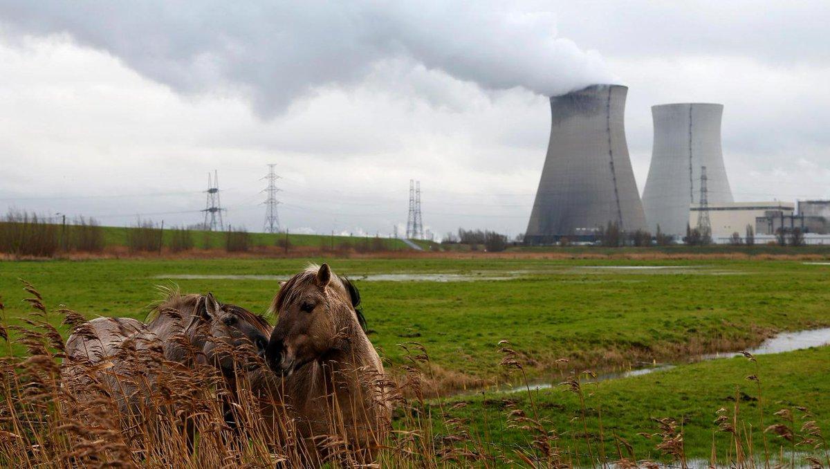 """test Twitter Media - """"Scheurtjes in Belgische reactoren al ontdekt tijdens bouw"""" https://t.co/d6BmmJlYwv #hln https://t.co/lTrNgPUirR"""