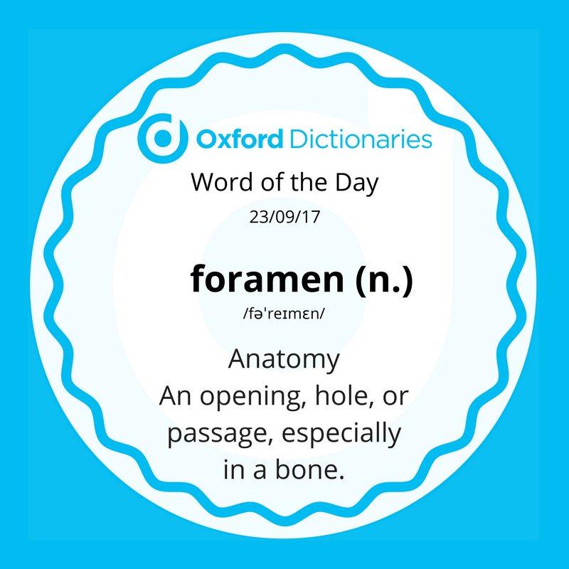 test Twitter Media - Word of the Day: foramen https://t.co/i0t03E0vRq https://t.co/GJcCo01oNq