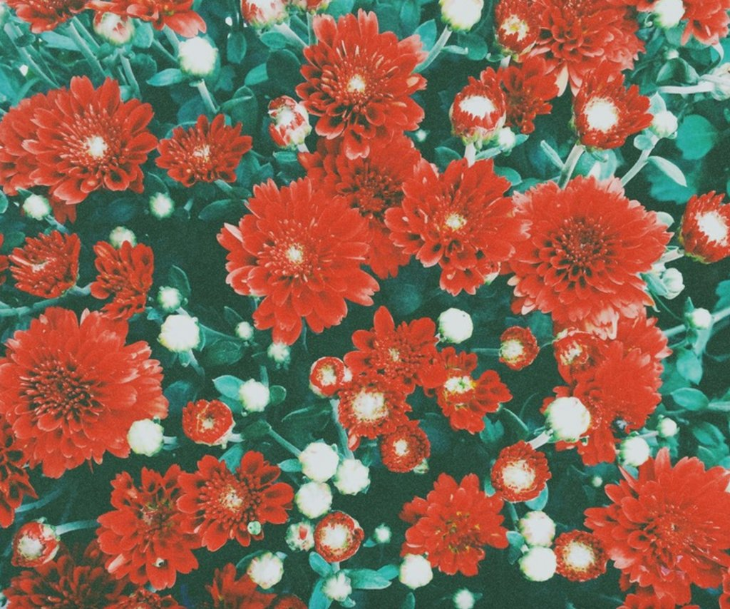 Take pictures of flowers and share them all here — https://t.co/Fj5FLZKJqS https://t.co/mvXSGO2eJj