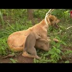 Animal safety: Busia launches massive rabies vaccination exercise