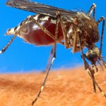 Michigan's Kent County reports 4 cases of West Nile virus