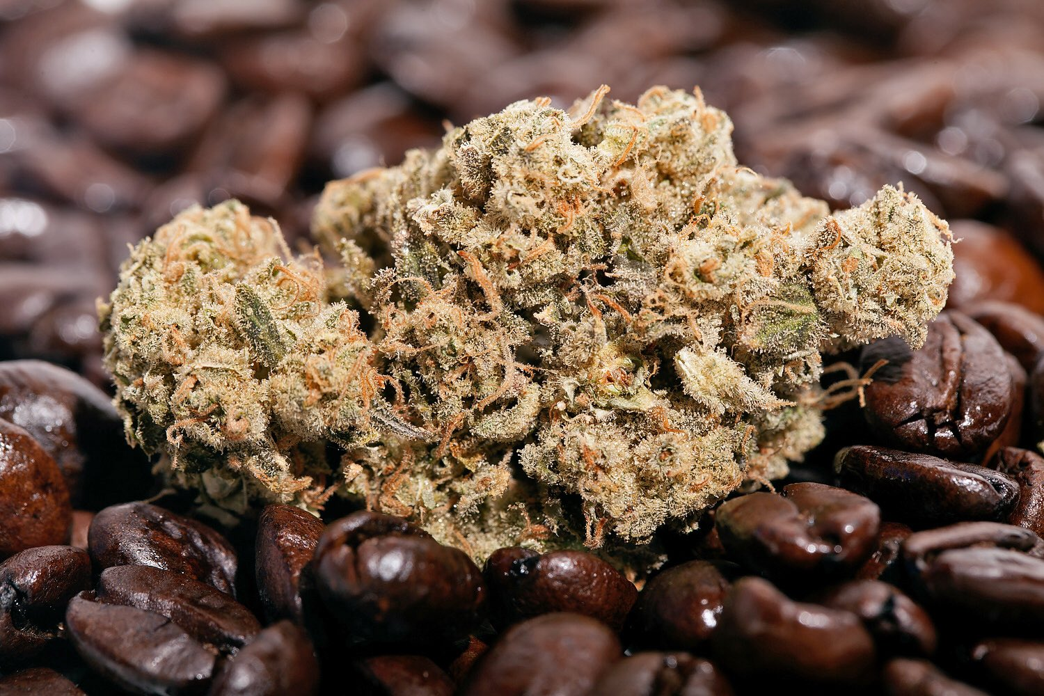 #Retweet for #cannabis!��         ❤️ for #coffee!☕️ https://t.co/AdVrkzdnOo