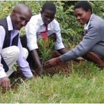 The green lessons that turned Asumbi Teachers' Training College  into a forest