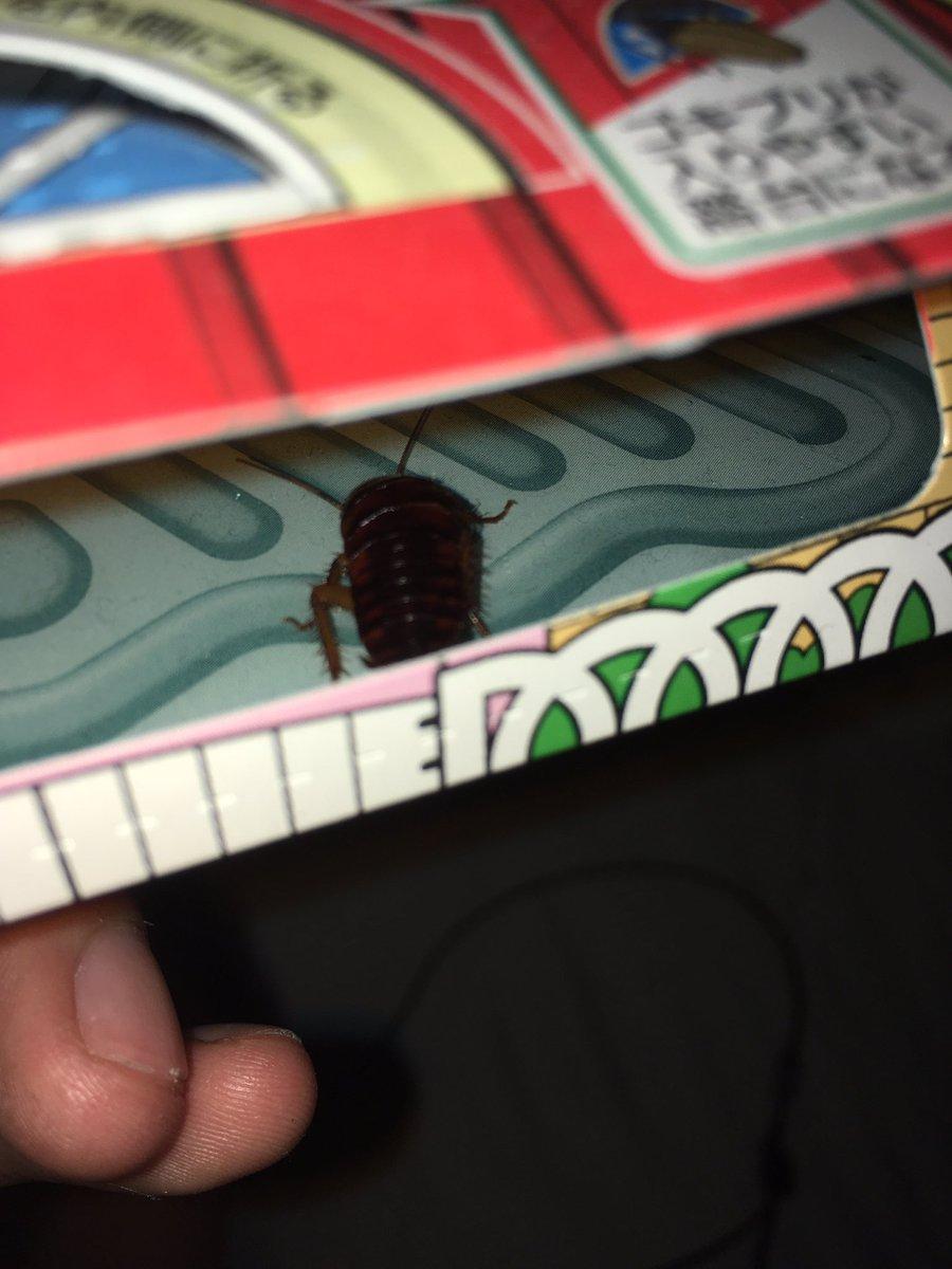 ベットでこのすば読んでる時にエアコンからチャバネゴキブリ降ってきて発狂してしまった…顔にクリーンヒットその後ティッシュで