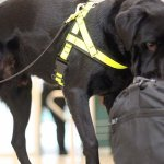 Sniffer dogs to track down poachers, animal trophies