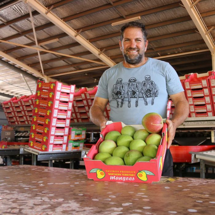 NT grower expects to harvest most mangoes ever on family farm