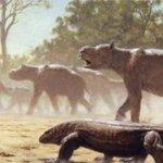 Prehistoric Ice Age relative of wombat, koala first migrant marsupial
