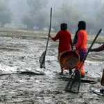 Willow trees caught out as culprit for Kashmir lake Wular's woes