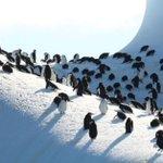 Environmentalists: UK's Antarctic islands need protection
