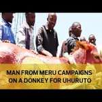 Man from Meru campaigns on a donkey for UHURUTO