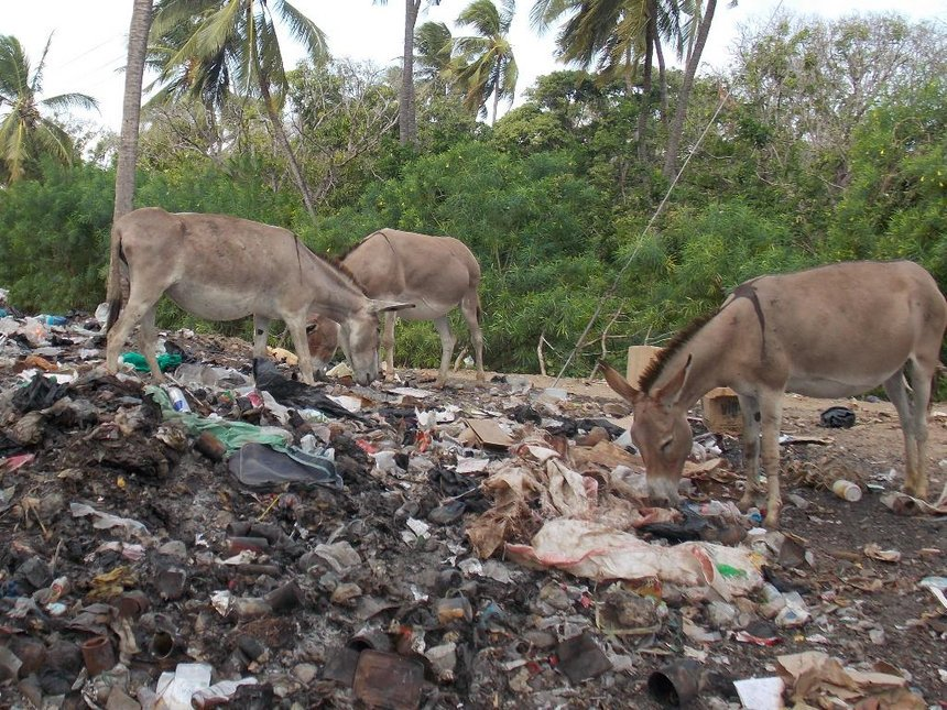 Lamu residents praised for obeying ban on plastic bags
