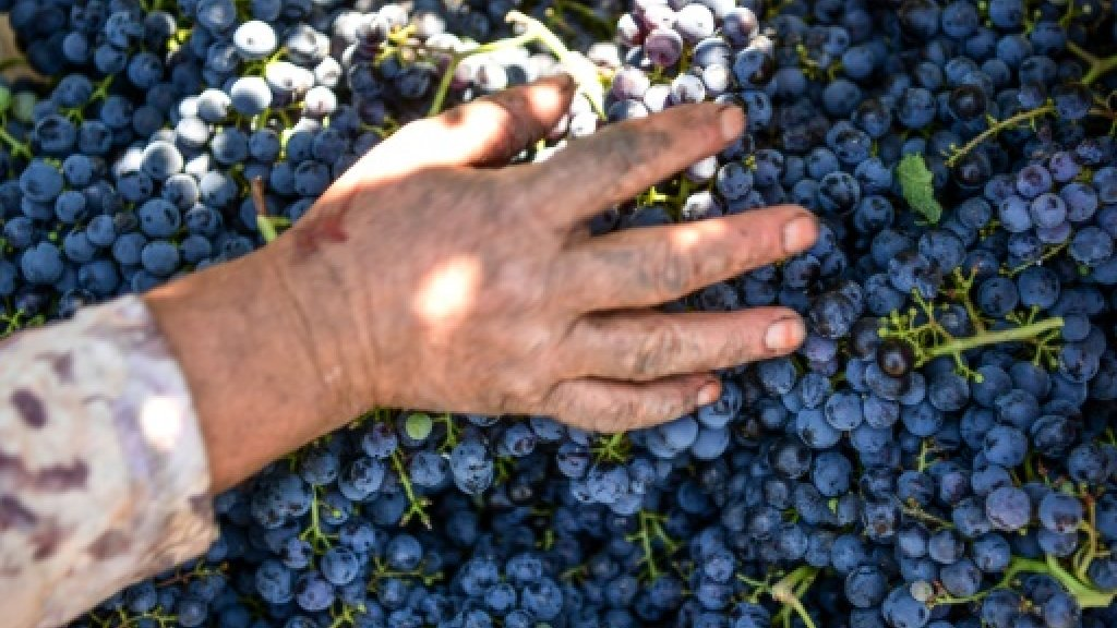 Despite strains, Turkey's wine industry refuses to wither