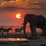 Juneau photographer's Africa photo to be displayed in Smithsonian
