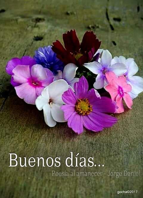 RT @BECHITOBECHO: Buenos días una flor para otra flor. #FelizJueves  #juevesdeganarseguidores https://t.co/GcxwokjU2J