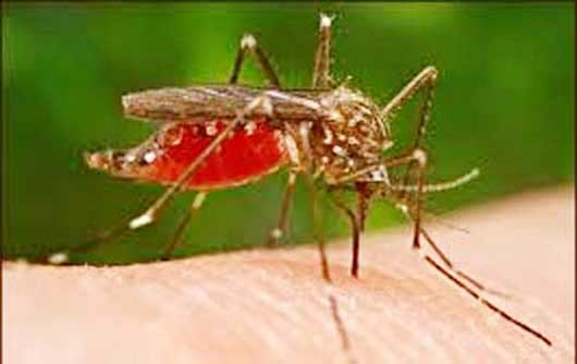 Malaria parasites in Africadecline 24pc, new study shows