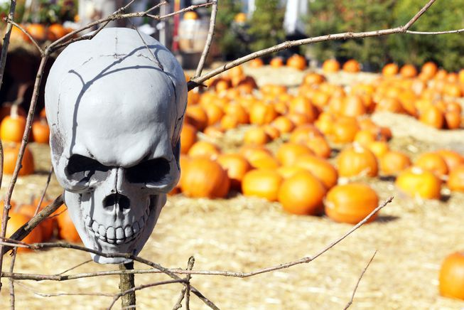 RT @MotherNatureNet: Field of screams: 10 scary Halloween farms  #NationalFarmersDay  https://t.co/6nuh3LWYmh https://t.co/BK7Mh2PLkv
