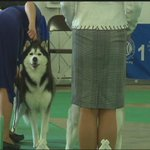 Hundreds of canines compete in annual Freeport dog show