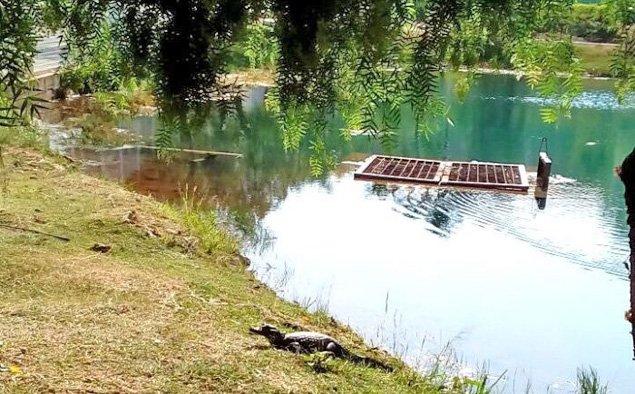 Após jacarés aparecerem em lagoa de parque, Hortolândia (SP) emite alerta