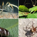 10 common spiders found in and around Britain's homes - but are they really all harmless?