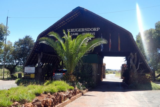 #Krugersdorp Game Reserve the new Bob van Reenen? Read here: https://t.co/XL5ud4YzpM https://t.co/0bU7Q0d7RW